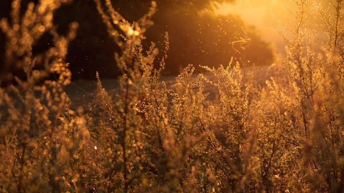 photography slang representing golden hour