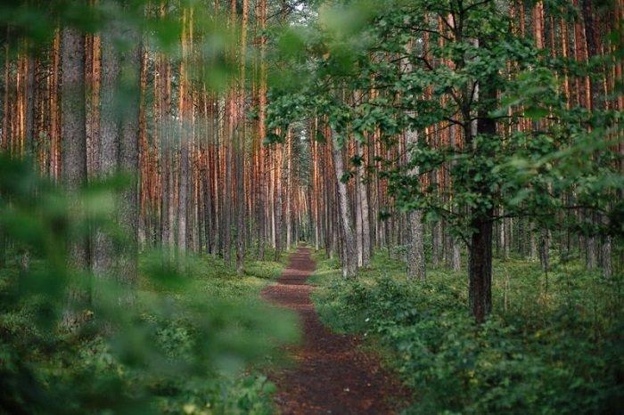 image of a long and narrow woodland path