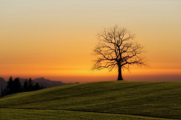 bare tree on a green landscape with a sunset in the background