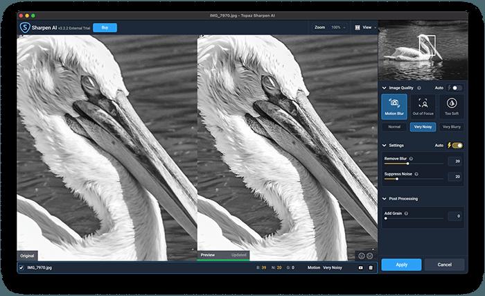 a screenshot of topaz sharpen ai photo editor featuring pelican example