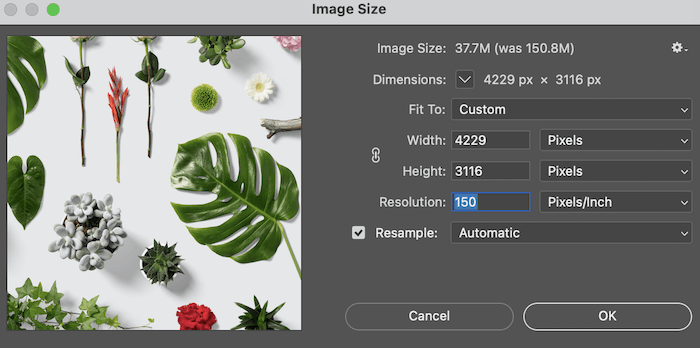 Image size box in Lightroom showing photo resolution of leaves