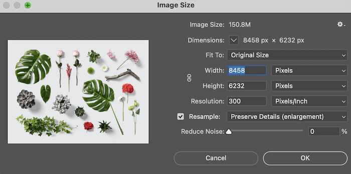 Image size box in Lightroom showing options to enlarge photo of leaves