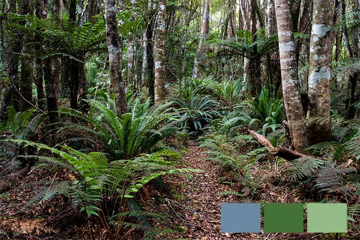 color in photography: a photo of ferns and trees in the wilderness showing an analogous color scheme