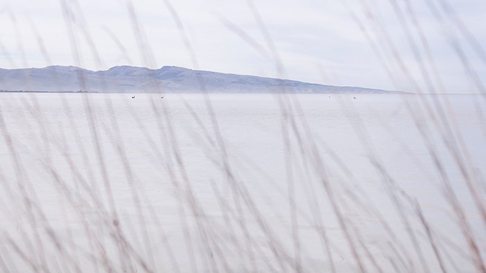 color in photography: a photo of a body of water taken through the tall grass on the shoreline