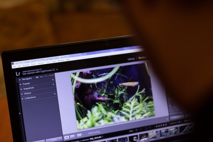a photographer edits an image on a laptop